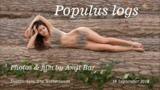 Populus Logs by Amit Bar